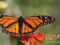 How to make a butterfly garden!