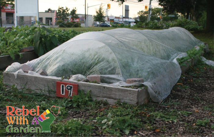 How To Buy And Use Floating Row Covers