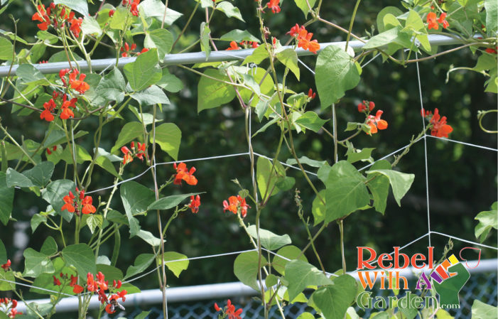 Vertical gardening with trellis netting
